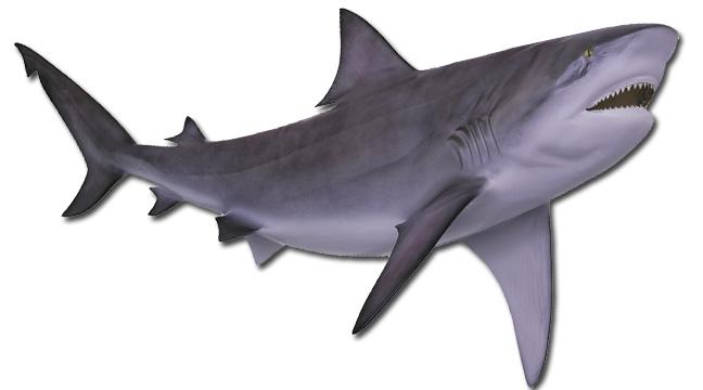 Atlantic Taxidermy Fish replica | Mounted Fish