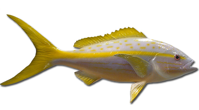 African Pompano Fish Mount